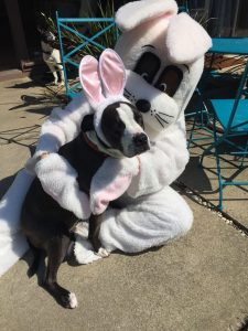 Easter Bunny Treat Trail @ End of Los Cerros Ave